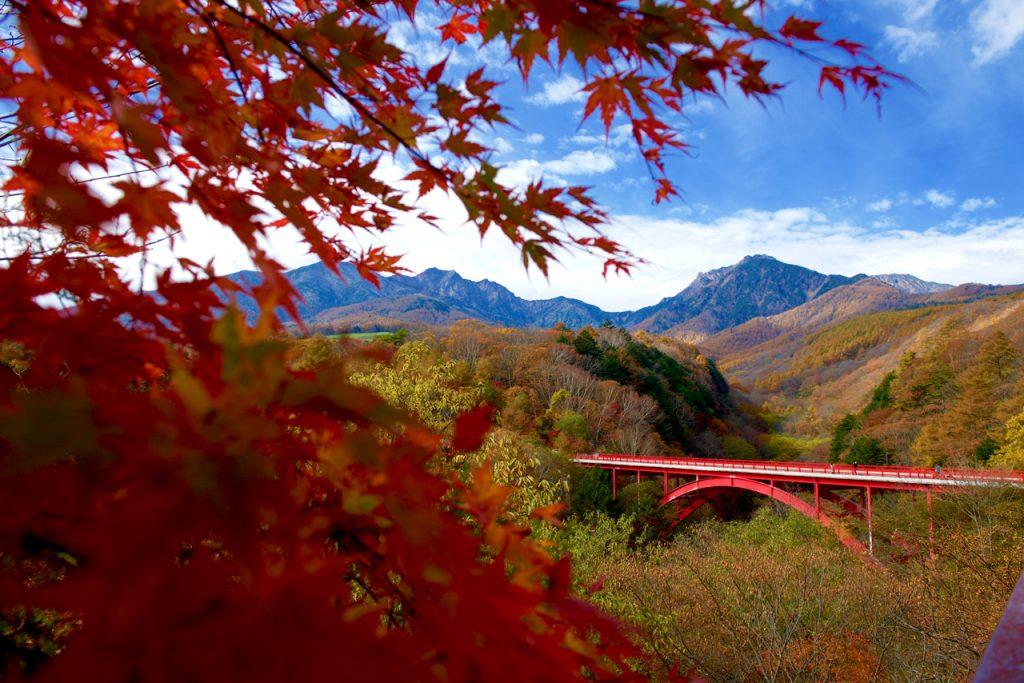 八ヶ岳紅葉